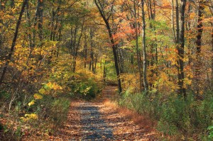 appalachian trail - fall foliage
